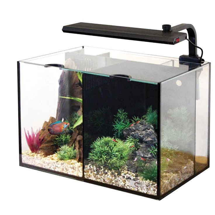 41 best images about fish tank on pinterest aquarium for Betta fish tanks walmart