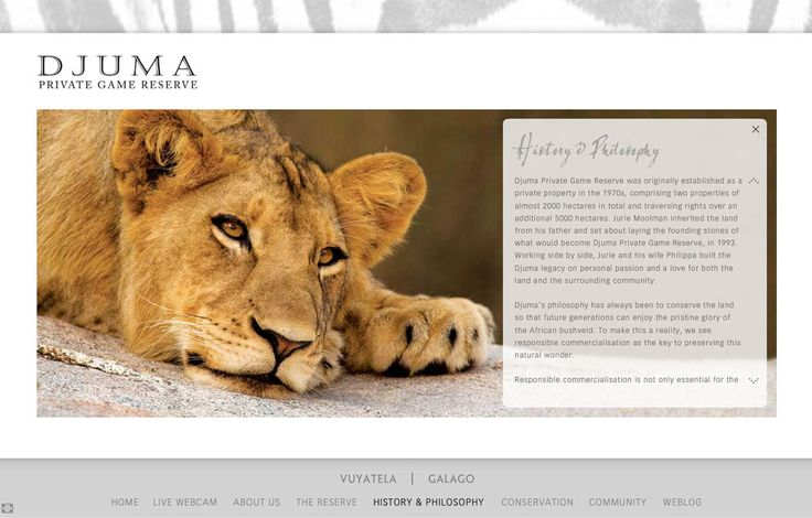 Djuma: Flash & WordPress Project Details by inMotion Graphics