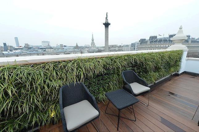 Vertical garden on roof terrace