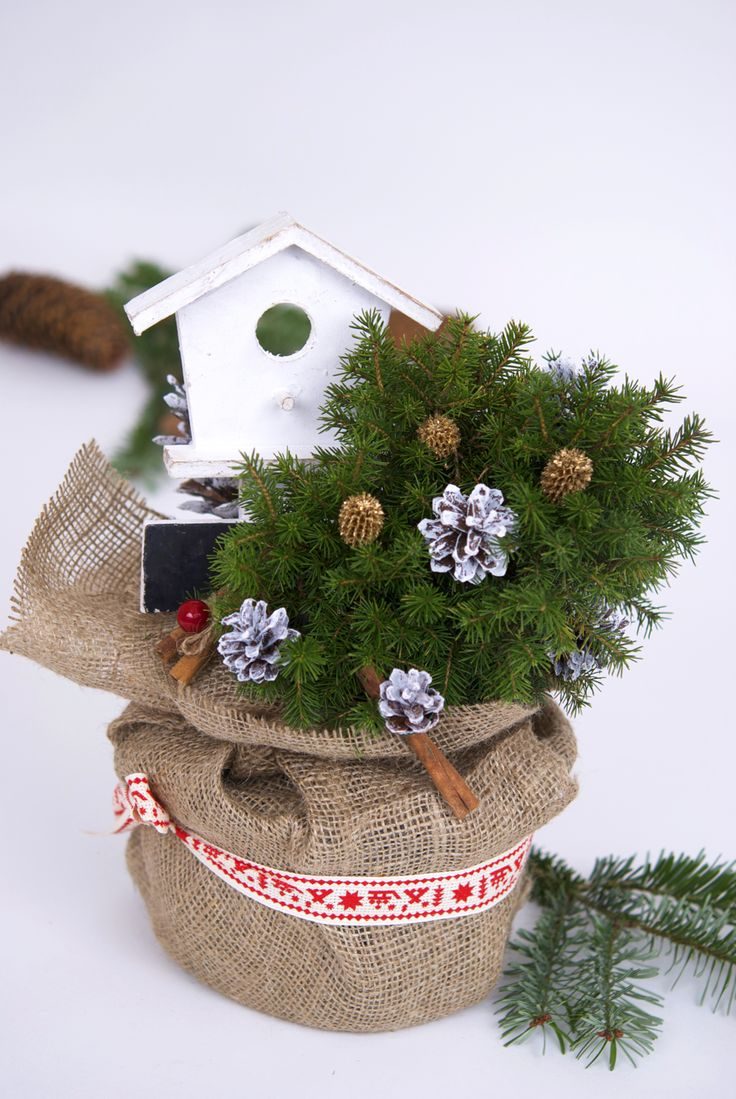 Christmas table arrangement with evergreen plants #picea #piceapungens #birdshouse #conifers #pottedplants #christmaspot #christmasdecoration #christmasplants #christmastree #christmastabletree #christmasdecor #Christmasplantgift #braziinghiveci #bradcadou #planteCraciun #plantecadou #aranjamentCraciun #bradCraciun #bradmicut #casutapasari