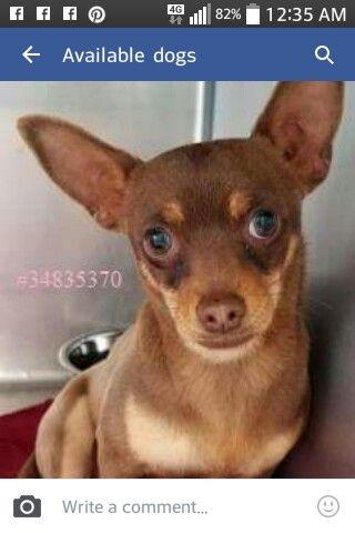 Corinne T. Smith Animal Shelter BROWNWOOD, TX   3-10-17