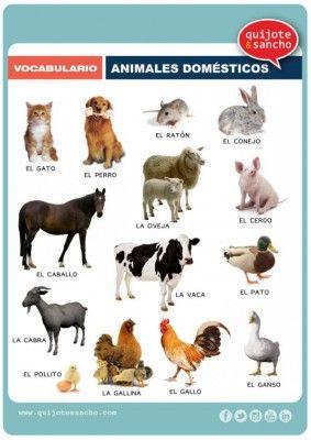Láminas para trabajar el vocabulario campo semántico animales domesticos