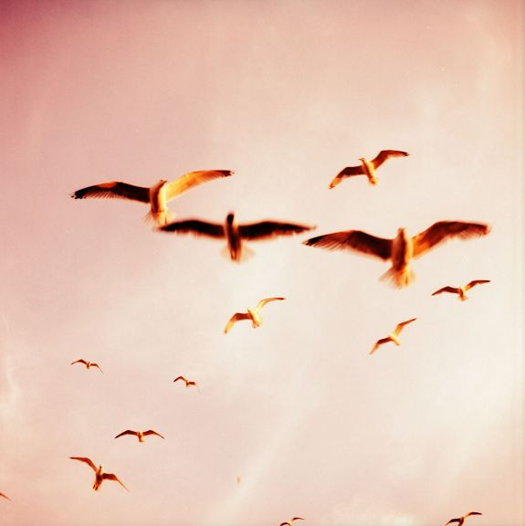 a flock flying