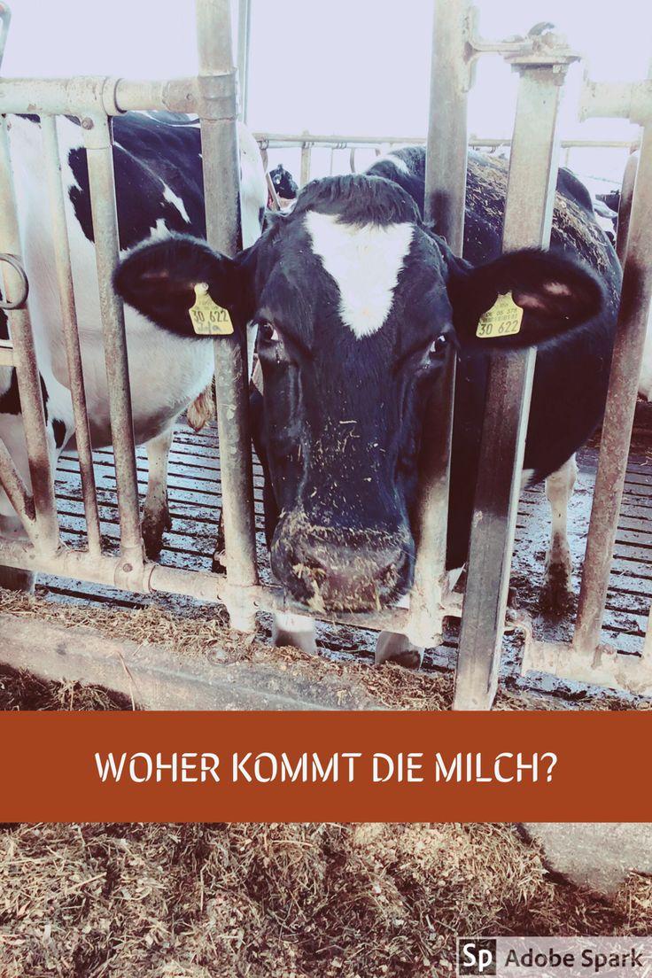 Ich war zu Besuch auf einem Milchbauernhof in Lohmar bei Siegburg, und habe mich dort mit einer Milchbäuerin über ihre Arbeit früher und heute unterhalten.