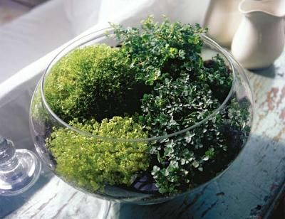 Great, simple directions for making a terrarium.