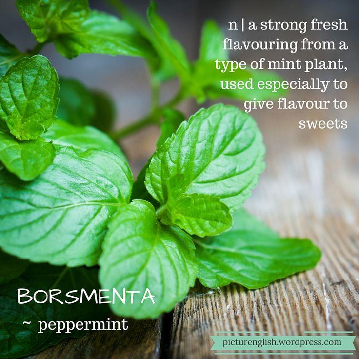 Peppermint / Borsmenta