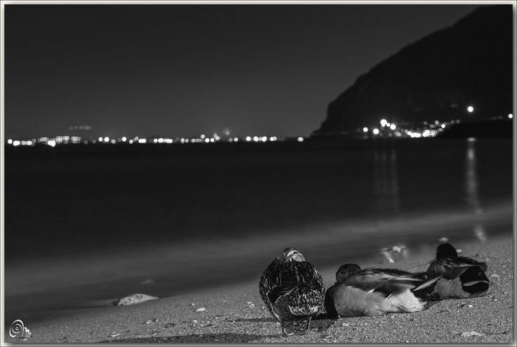 Aspettando . . . by Massimiliano d'esposito  on 500px