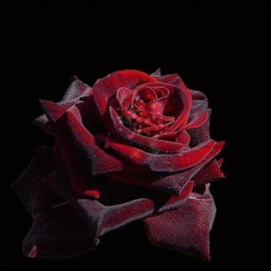 Zdjęcia jaskrawe kolory. Piękne kwiaty świeże gif