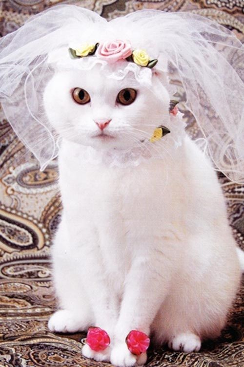 Fifi's been looking at bridal gowns in case she gets married to Spike! ( Don't tell Spike!)