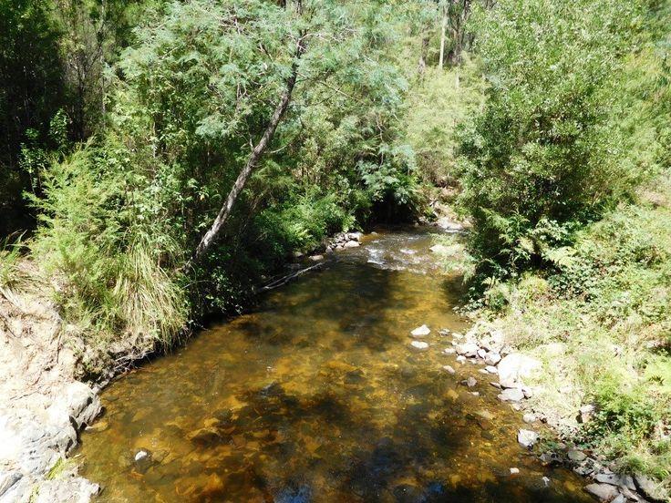 Tanjil River East Branch: Canoeing Gippsland, Victoria, Australia.