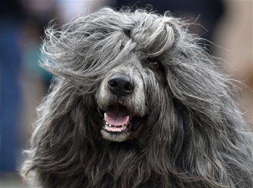 Germany Dog Show   http://globenews.co.nz/?p=14091