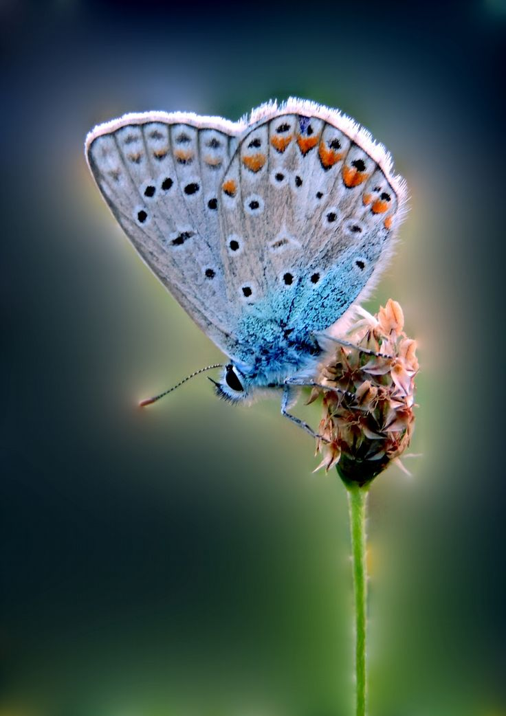 Butterfly by Remo Fiebig on 500px
