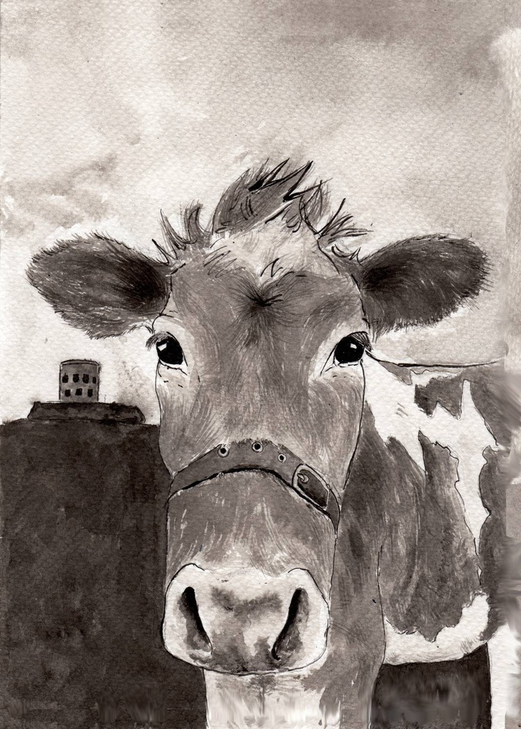 Nancy the Guernsey cow, Indian ink painting on Fabriano, 2012Guernsey Cows, Brown Cows