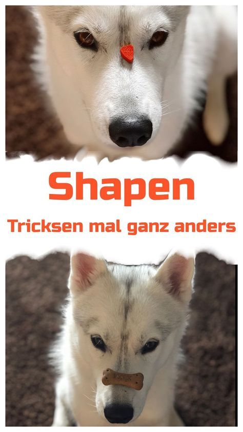 Shapen? So your dog learns alone on the …