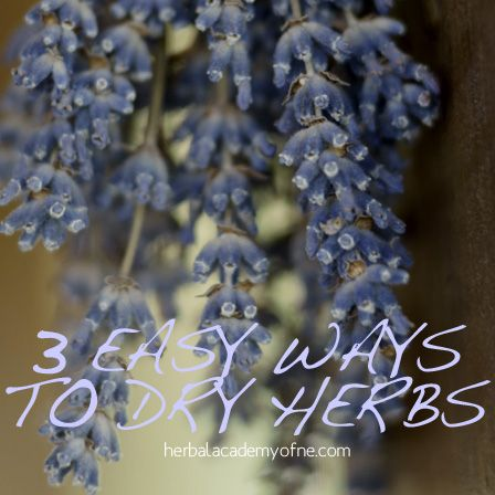 3 Easy Ways To Dry Herbs | Herbal Academy of New England