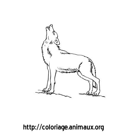 Les 25 meilleures id es de la cat gorie loup hurlement sur - Dessin loup garou ...