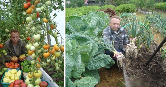 Spoznajte tajomstvá najúrodnejšej záhrady, ktorou sa pýši pestovateľ Igor Ljadov. Pestovanie zeleniny, kompost, úroda, úrodná záhrada, záhony