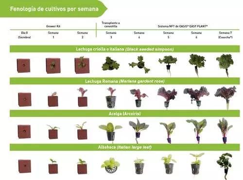 sistema hidroponico nft horizontal lechugas hortalizas