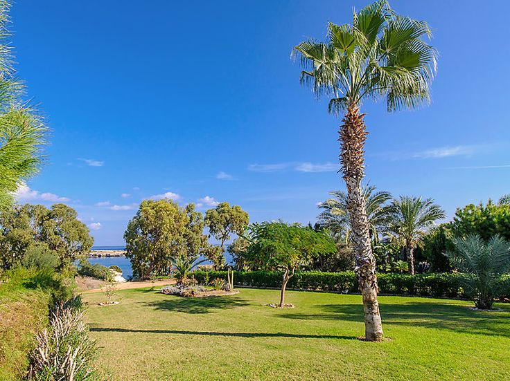 Amazing and wide garden on Cyprus with oceanview #island #ocean #palmtree