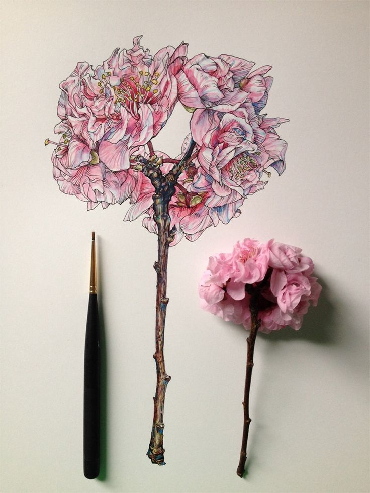 Flowers in Progress: Scientific Illustrator Taunts Us with Spring illustration flowers