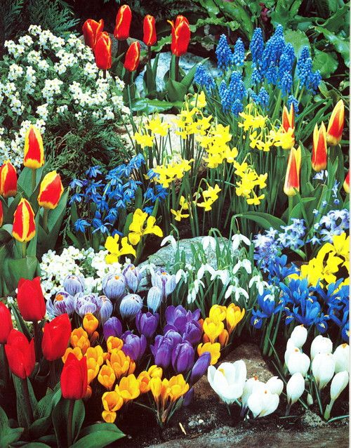 Spring Gardens best 20+ spring garden ideas on pinterest | spring flowers, dream