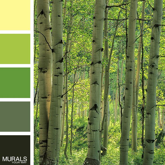 We Love This Color Palette With Charles Gurcheu0027s Beautiful Aspen Forest  Mural! Tree MuralsWall ... Part 66