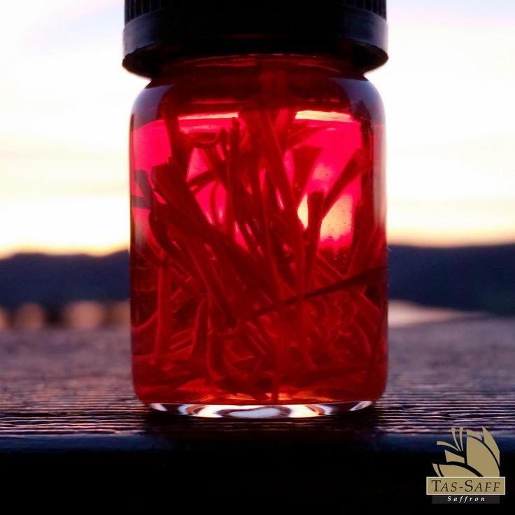 #Saffron #Sunset // #Beauty in & out.   -- #king #spice #cooking #inthekitchen #recipe #ingredient #glaziersbay #tasmania #australia #tassaff #saffron #getcooking #infuse #quality #premium