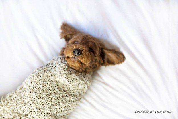 Newborn (puppy) photos