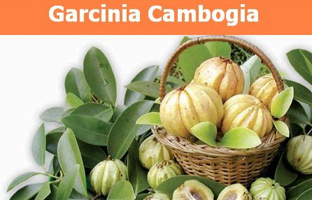 """Garcinia Cambogia – Dr. Oz Calls it the Holy Grail of Weight Loss!    """"Dr. Oz reveals why garcinia cambogia is an exciting breakthrough in natural weight-loss. Learn how this dual-action fat-burner can help you double and triple your weight loss!"""""""