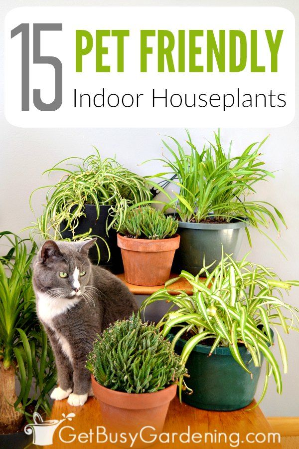 15 Indoor Plants That Are Safe For Cats And Dogs Plants Pet Friendly Cat Safe Plants Plants
