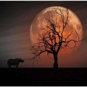 African Rhino In Forest At Night Wallpaper | african rhino in forest at night wallpaper 1080p, african rhino in forest at night wallpaper desktop, african rhino in forest at night wallpaper hd, african rhino in forest at night wallpaper iphone