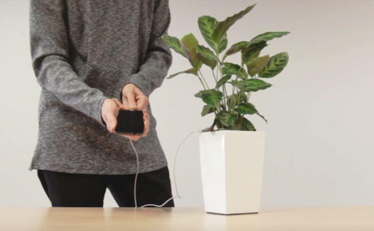 """Una planta para cargar tu """"smartphone""""Con los recientes cambios que están ocurriendo en todo el mundo -deshielo de los polos, contaminación, temblores, etc.- es natural que se comience a... Check more at http://www.tuiris.com/sabias-que/esta-planta-carga-tu-smartphone/"""