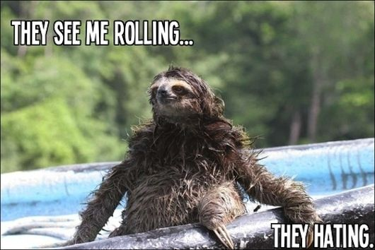 Sloth that's rolling | The 25 Greatest Sloths The Internet Has Ever Seen