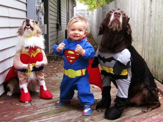 Toddler and Dogs In Cute Costumes