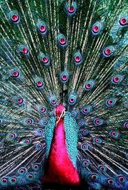 Resultado de imagen para imagenes de pavo realed rosados