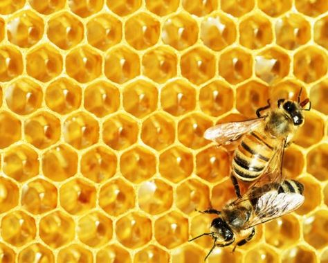 Honeybees try their best to pollinate the crops. However, their honey production and hive health is less than optimal; quite understandably so. The bees need activism on their behalf – but not of the kind currently in vogue.