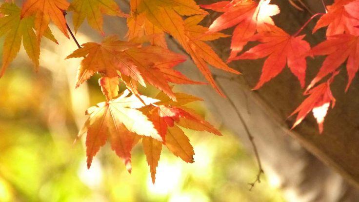 盛岡城跡公園(岩手公園)の紅葉