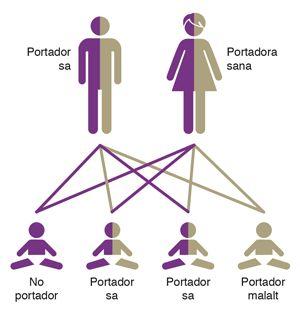 Test de detecció de malalties genètiques