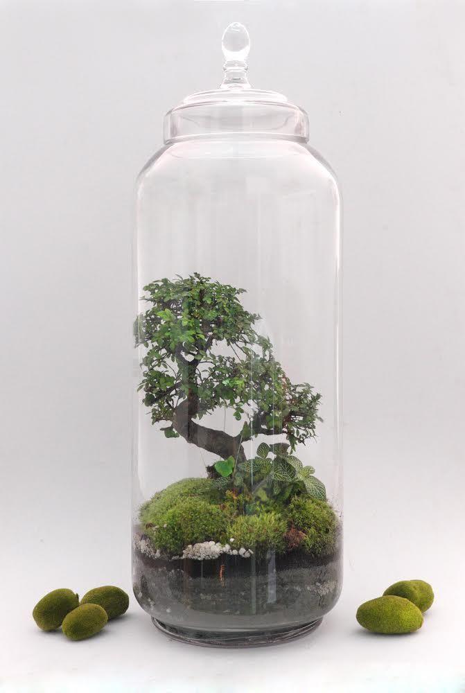 Jardins de verre de la Green factory, j'adore; écosystème dans un bocal de verre…