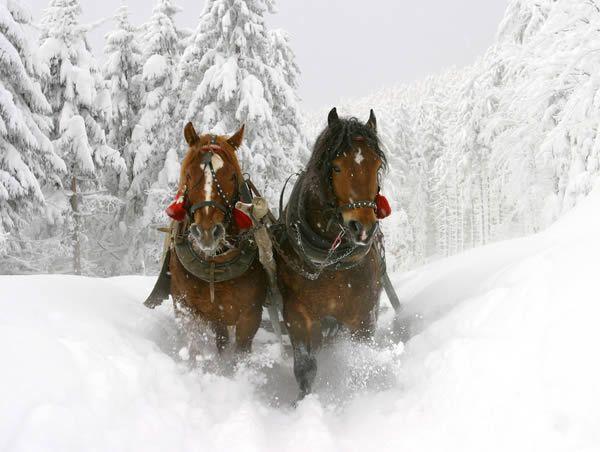 Enjoy a horse sleigh ride in winter in Austria