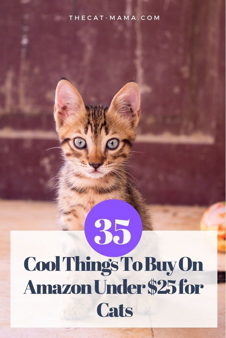 Who Doesn T Like Shopping For A Good Sale Are You That Person Who Can T Go Past A Pet Store Without Buying Someth Cats Cool Things To Buy First Time Cat Owner
