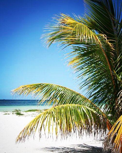 Cayo Blanco - Cuba #cayoblanco #cayoblancoisland #cayoblancobeach #cuba #varadero #sun #beach #whitesands #isle #caribe #caribeanbeach #america #americalatina #turquosewater #sol #arena #marcaribe #mar #sea #holidays #quiettime #relax #timeoff #palms #palmeras by monica_antona