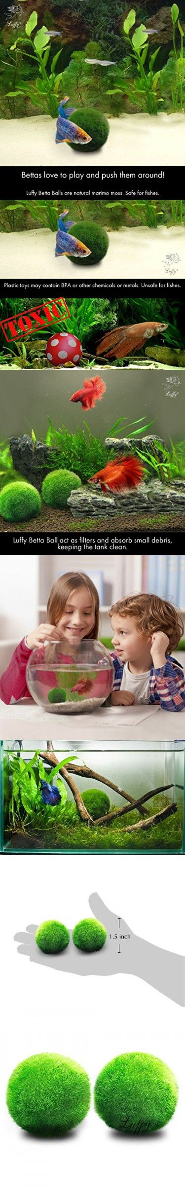 2 LUFFY Betta Ball : Live Round-Shaped Marimo Plant Toy for Betta Fish : Natural and Aquarium Safe