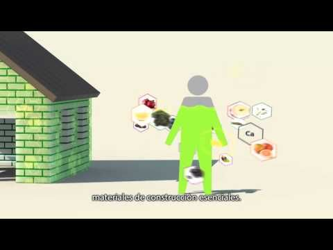 Video de Cuatro Fundacionales Nutrilite