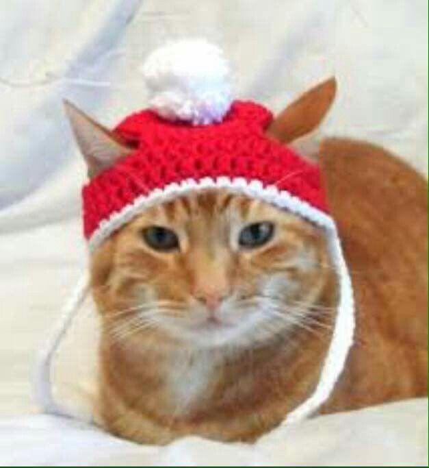 Youtube Cat Hookup Video Cat Lover Merchandise
