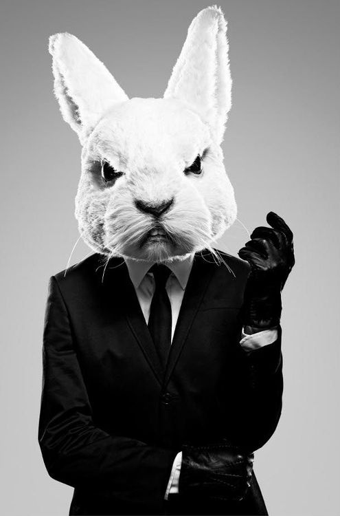 bunny in a suit. shit just got real.