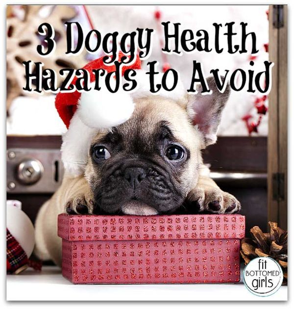 3 Doggy Health Hazards To Avoid During The Holidays Pet