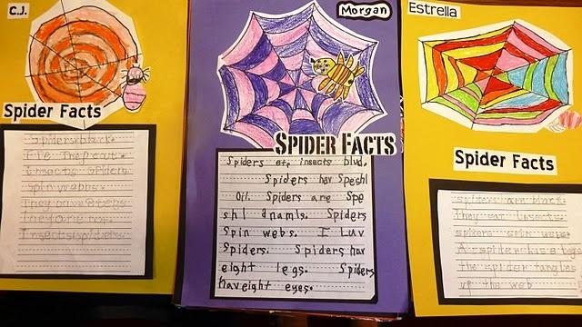 The Writing Spider (Argiope aurantia)