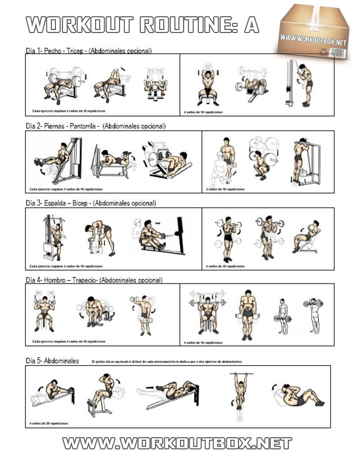 Workout routine a healthy fitness full body training