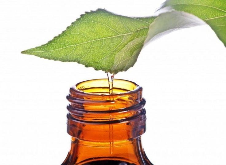 Eliminar los hongos de las uñas - tea tree